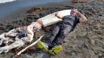 Օվկիանոսի խորքերը ավտոբուսի երկարության կաղամարներ են թաքցնում