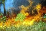 Ադամանդի գործարանի մոտ այրվել է 3000 քմ խոտածածկույթ