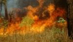 «Բուսաբանական» այգու տարածքում այրվել է 2000 քմ խոտածածկ տարածք
