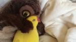 Հուզիչ տեսանյութ. թութակը գրկախառնվում է խաղալիք բուի հետ