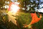 Օդի ջերմաստիճանը սեպտեմբերի 28-ի ցերեկը կնվազի 3-4 աստիճանով