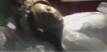 «Youtube»–ի հիթը. 300 տարի առաջ մահացած  սուրբ աղջիկը բացել է աչքերը (տեսանյութ)