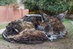 Նկարիչն աղբը կենդանիների է վերածում՝ պայքարելով շրջակա միջավայրի աղտոտման դեմ (ֆոտոշարք)