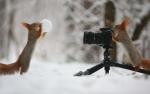 Աշխարհի ամենահմայիչ սկյուռները՝ ռուս լուսանկարչի օբյեկտիվում (ֆոտոշարք)