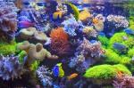 Ջրային կենդանիներ և բույսեր էր ապօրինի արդյունահանել