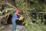 Ծառի ճյուղերը պոկվել և ընկել են էլ. լարերի և գազատար խողովակների վրա