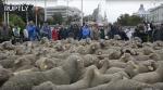 Հազարավոր ոչխարներ զբոսնել են Մադրիդում