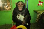 Սիբիրում շիմպանզեն որդեգրել է անօթևան կատվին (լուսանկար, տեսանյութ)