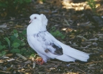 Ոչ ռացիոնալ են ոչ միայն «Պատերազմի բազեները», այլ նաև «Խաղաղության ղշերը»