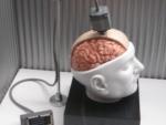 Գիտնականներն առաջին անգամ օգնել են կաթվածահար մարդուն շարժվել մտքերի ուժով