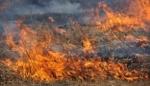 «Էրեբունի» օդանավակայանի մոտ այրվել է մոտ 700 քմ խոտածածկույթ