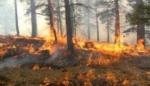 «Սևան ազգային պարկ»-ի Հայրավանք կոչվող տեղամասում այրվել է մոտ 0,5 հա բուսածածկ տարածք
