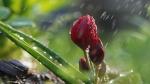 Շրջանների մեծ մասում սպասվում է անձրև և ամպրոպ