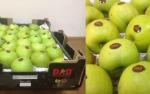 Բագրատաշենի մաքսակետում կաշառք են տվել․ նոր մանրամասներ ադրբեջանական խնձորների վաճառքից