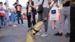 Չինացին փողոցով զբոսնել է կոկորդիլոսի հետ, այնուհետ նրանից խորոված է պատրաստել (լուսանկար)