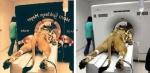 Համացանցում տարածված կեղծ լուսանկարների բացահայտում (ֆոտոշարք)