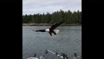 Արծիվը թռցրել է ձկնորսի որսը