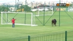 Ցուլն ու շունն ընդհատել են ֆուտբոլային հանդիպումը