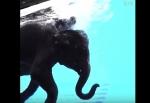 Թայլանդի կենդանաբանական այգու լողացող փիղը