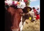 Ռուսաստանում կովերի գեղեցկության մրցույթ է անցկացվել