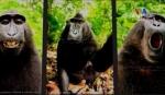 Կապիկի արած սելֆիները քննարկվում են դատարանում