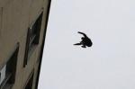 Էջմիածնում 15-ամյա աղջիկը նախկին կինոյի 5 հարկանի շենքի տանիքից իրեն ցած է նետել