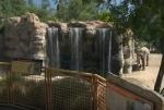 Լոս Անջելեսի կենդանաբանական այգու փիղը ընկճախտի մեջ է