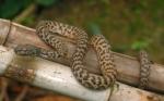 Վահագնի թաղամասի տներից մեկում օձ են բռնել