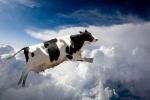 Թռչող կովերը, թանկ կարագը և 2018-ի վարչապետը