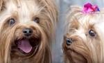 Համացանցի միջոցով շան ձագ գնելուց առաջ դիտեք այս տեսանյութը