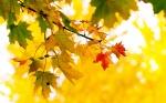 Օդի ջերմաստիճանը հոկտեմբերի 20-ին, 21-ի գիշերը կբարձրանա 2-3 աստիճանով, այնուհետև էապես չի փոխվի