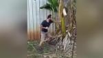 Տղամարդը բռունցքի հարվածներով տապալել է բանանի ծառը