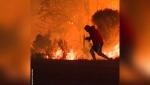 Տղամարդն իր կյանքը վտանգի է ենթարկել ճագարին կրակից փրկելու համար