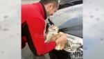 Կուբանի բնակիչը ավտոմեքենան լվացել է կատվով