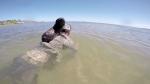 Ծովառյուծի ձագը կարծում է, թե ուրուգվայցին իր մայրն է