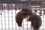 Անգլիայի այս արգելոցում ծայրահեղ ցուրտ ջերմաստիճանը կենդանիներին ոգևորել է