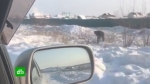 Յակուտսկի բնակիչները թափառում են դաշտերով և փնտրում ինքնաթռից ընկած ոսկե սալիկները (տեսանյութ)
