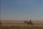 Ուղտերի մրցավազքը Եգիպտոսում