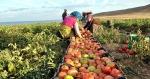 Իսրայելը դադարեցնում է թուրքական գյուղմթերքի ներմուծումը
