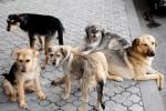 Յուրացումներ «Թափառող կենդանիների (շների) ստերջացման և պատվաստման ծառայությունների» մատուցման ընթացքում (տեսանյութ)