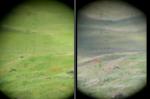 Ադրբեջանցիների այցը Գյուննուտի գերեզմաններ (տեսանյութ)