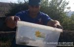 Թալինի տներից մեկի բակում օձ է հայտնաբերվել