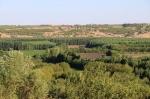 Թուրքիայի սահմանային գոտիներում արգելվել է ծառեր տնկել