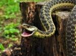 Նոր Նորքի շենքերից մեկի բակում օձ են բռնել
