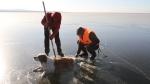 Չիտայում փրկել են սառույցում արգելափակված շանը