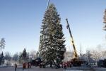 Ինչպես են Ռուսաստանի գլխավոր ամանորյա եղևնին կտրում անտառում