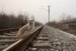 Չինաստանում կլոնավորում են շներին
