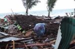 Կենդանի, թե մահացած․ Ինդոնեզիայի բնակիչները ցունամիից հետո փնտրում են իրենց հարազատներին և մտերիմներին
