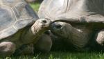 В Австрии 120-летние черепахи «развелись» после 115 лет совместной жизни