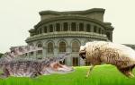 Կոկորդիլոս VS ոչխար